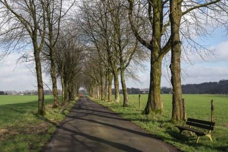 Allee zwischen Bauernhof und Wald