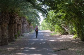 Schattiger Rückweg unter Palmen