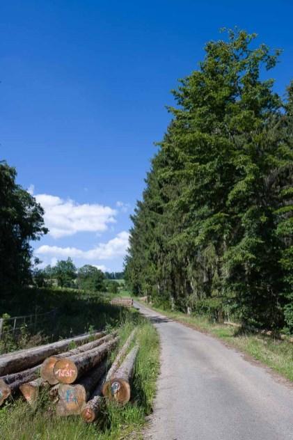 Unterwegs am Waldrand