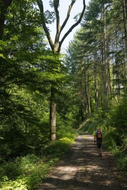 Auf dem Rückweg im Wald