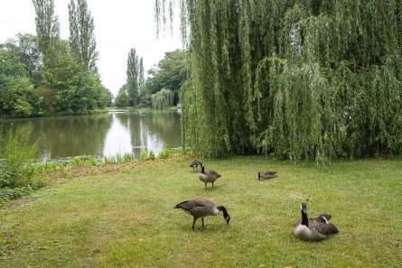 Enten am großen Teich