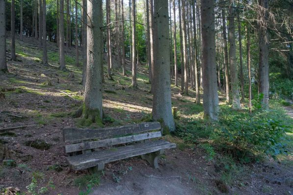 Bank gleich am Start in den Wald