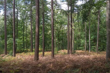 Im Wald gab es viele abgestorben Farne