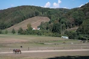 Pferdekoppel am Waldcafe