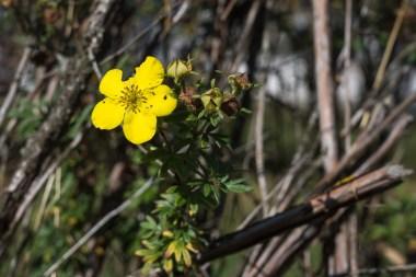 Eine der letzten Blüten