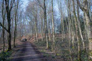 Breite Waldwege ohne Matsch