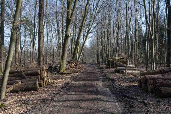 Typischer Waldweg auf der Süchtelner Höhe