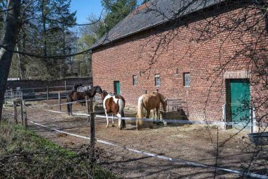 Pferde am Ortseingang von Satzvey