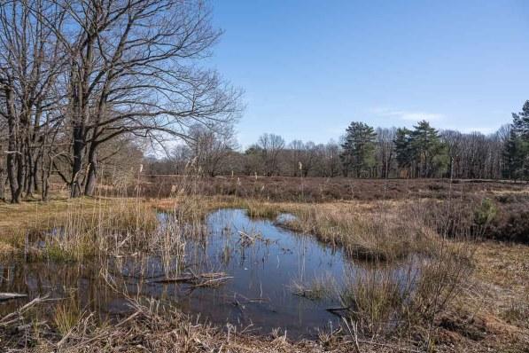 Teich in der Heide