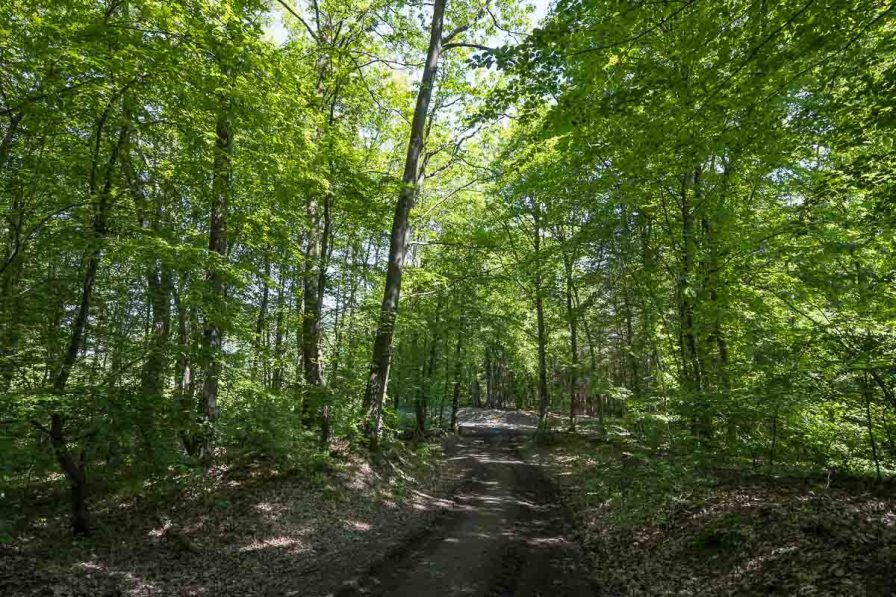 So sah der Wald dort typischerweise aus.