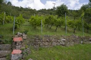 Weinbau in der Rhön
