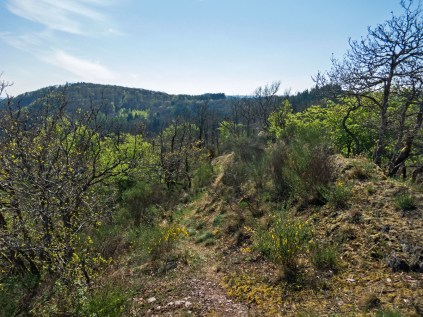 Blick zurück - Der Bergrücken