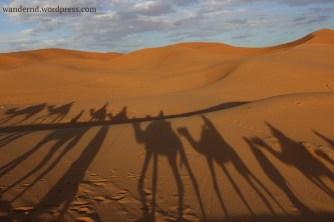 Dromedare in der Wüste Marokkos
