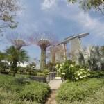 Super tree grove in Singapore.
