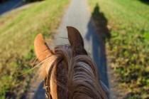 Pferd-7990