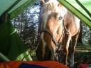Wanderpferd-24-2