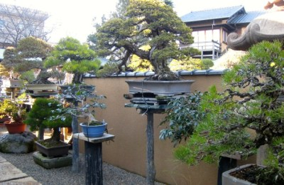 Bonsai Museum: Century-Old Trees in Pots