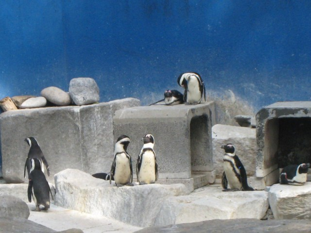 Penguins in Chiba Zoo