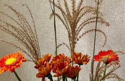 Grasses and Orange Hues