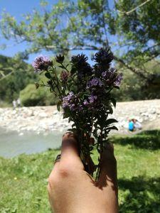 Kuidas ma mägedes taimetargaks õppida tahtsin ja mis sellest sai