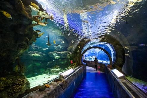 Image result for mall of america aquarium