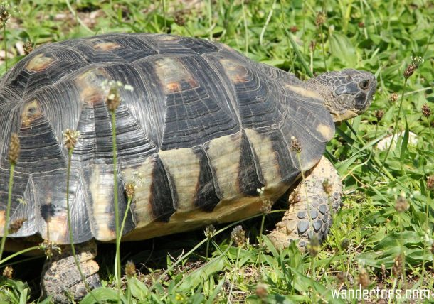 Turtle on grounds of Temple of Hephaestus