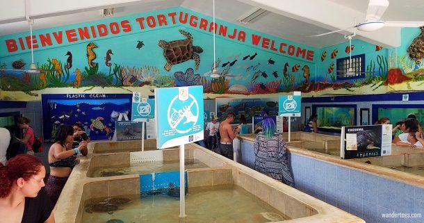 Things to do Isla Mujeres, Isla Mujeres things to do, what to do in Isla Mujeres, Punta sur Isla Mujeres, snorkel isla mujeres