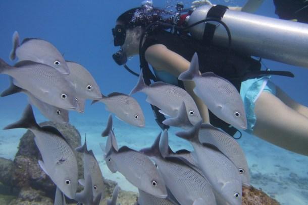 Scuba Diving Cancun Mexico, Scuba Cancun, Scuba Diving Isla Mujeres, Diving Isla Mujeres, MUSA