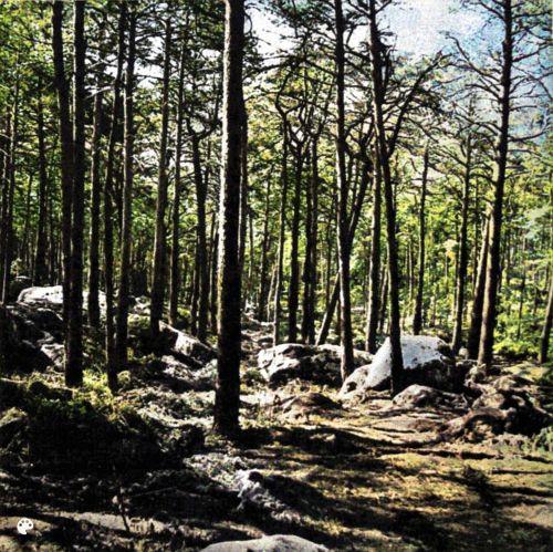 Massif de Fontainebleau de J. Loiseau - 01 - couleur