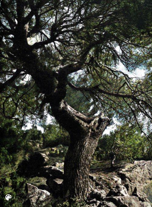Massif de Fontainebleau de J. Loiseau - 03 - couleur