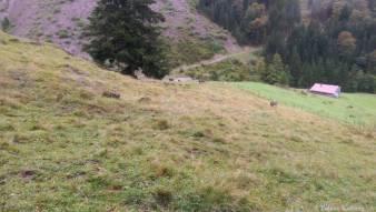 Wandern_PwC_Gipfelstuermer_2014_Tag2_Tobias_035