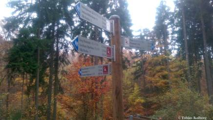 Wandern_20141103_Baumgeistertour_Rundweg_Tobias_011