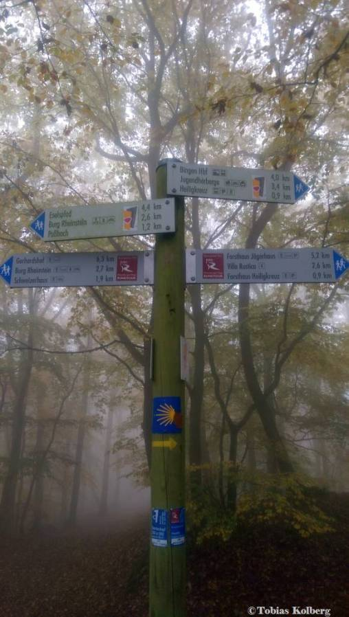 Wandern_20141103_Baumgeistertour_Rundweg_Tobias_033
