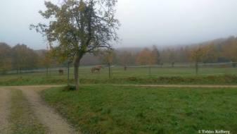 Wandern_20141103_Baumgeistertour_Rundweg_Tobias_094