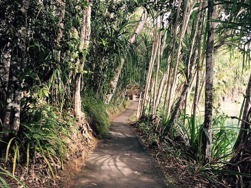 waterfalls and rainforest tour cairns