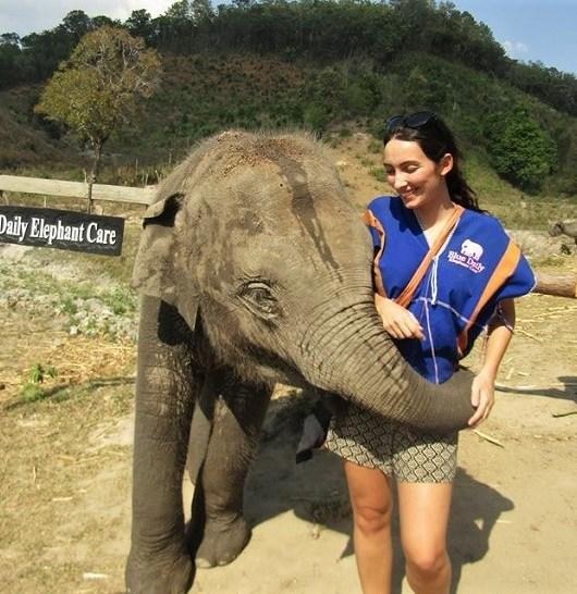 Elephants in Chiang Mai