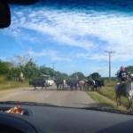 Typical roadblock
