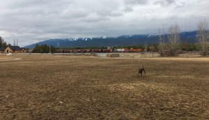 Lucy Whitefish dogpark - wander with melissa