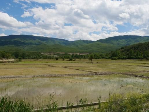 Reisfelder in der Nähe von Boyabat.// Rice fields near Boyabat.