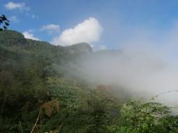 Yunnan jungle.