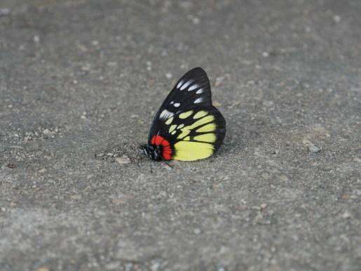 Butterfly.// Schmetterling.