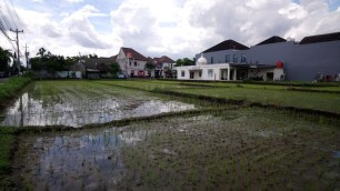 Rice paddies in the middle of the city.// Reisfelder inmitten der Stadt.