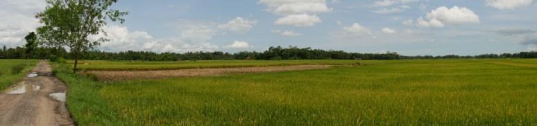 Rice paddies.// Reidfelder.