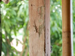 Lizzard.// Gecko.