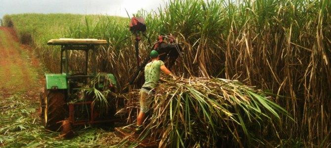 Wereldreis #15 | Lekker aan het werk op de boerderij in Australië