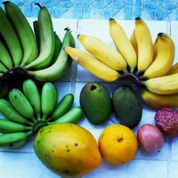 Vers-fruit-van-de-boerderij