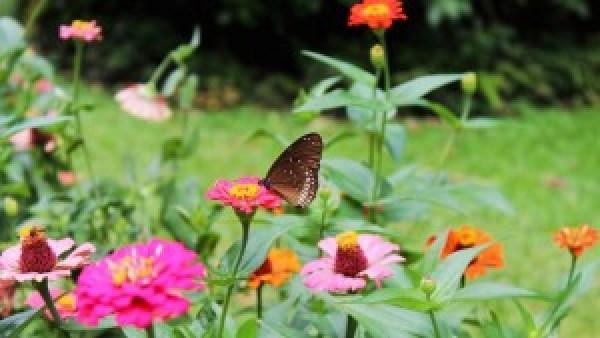 Bloemen en vlinders Botanic Garden Kandy