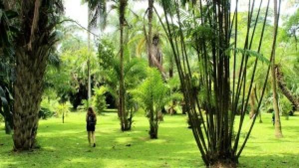 Botanic Gardens Kandy Sri Lanka