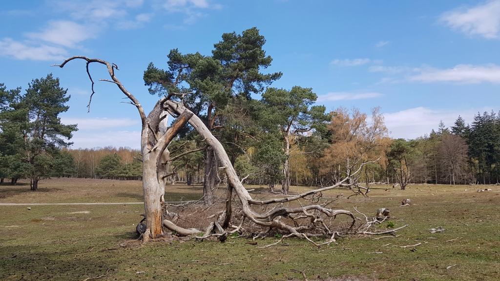 Trekvogelpad-etappe-13-Elst-heide-grafheuvels