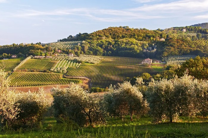 Valley, hills, olive trees and vineyards! Tuscany!!